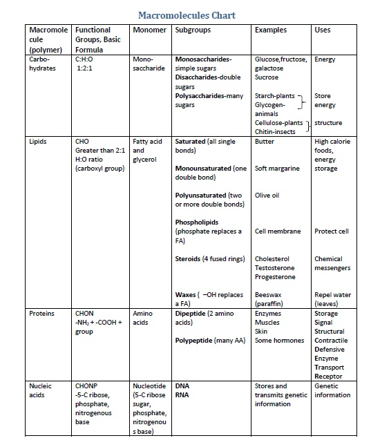 Frayer Model Macromolecules Answer Key Template
