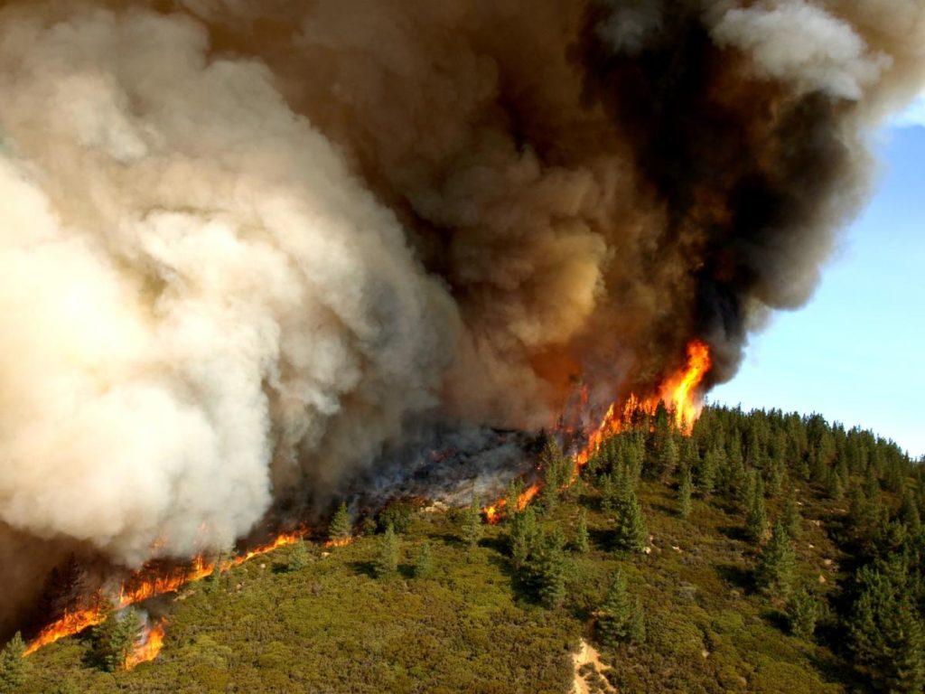zaca wildfire california