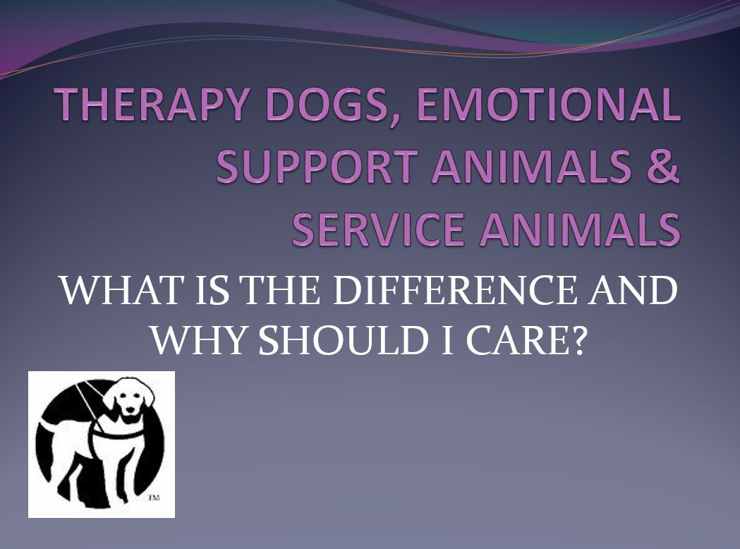 Therapy Dogs Emotional Support Animals And Service Animals